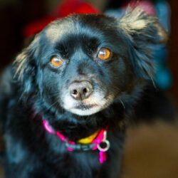 HOW TO: Introduce a rescue dog to your family