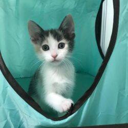 Keeping Kittens Healthy — From Six Weeks To Four Months Old
